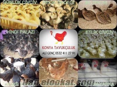 konya tavukçuluk civciv yarka tavuk ördek hindi tüm illere gönderilir