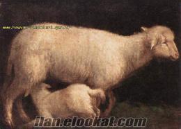 denizli çivrilde satılık koyun kuzu bulunur etlik ve damızlık