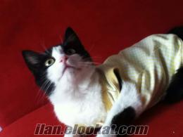 acil yavru kedi yuva miki tiki