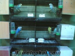 Üreticisinden satılık yavru kuş çeşitleri