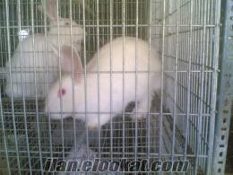 tavşan eti tavşan