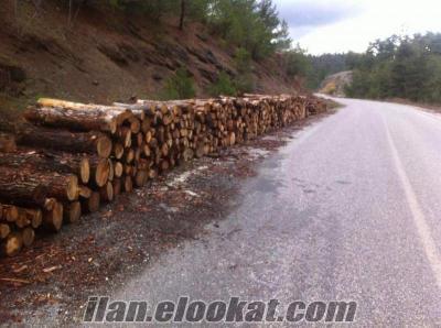 Bursa İnegöl yakacak odun