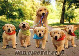 Bedava Köpek Arıyorum !!!!!!