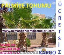 Palmiye tohumu, palmiye tohumu fiyatları, palmiye tohumu fiyatı, palmiye tohumla