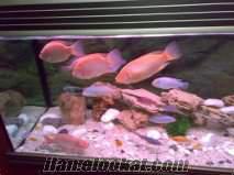 şişli 4.leventte dev balıklar toplamda 9 adet