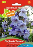 Paulownia ağacıpaulownia tohumuçin kavağı ağacıçin kavağı tohumupaulownia-ağacıp