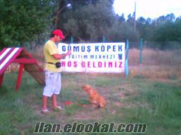 Sivas Köpek Eğitim Merkezi