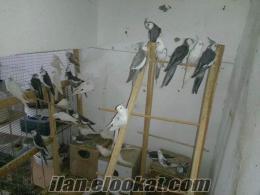 izmirden papağan lar