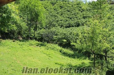 giresun bulancakta demircili köyünde doğal ortamda doğa tatili