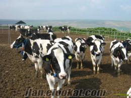 Önder Tarım Hayvancılık Lmdt Şirketi