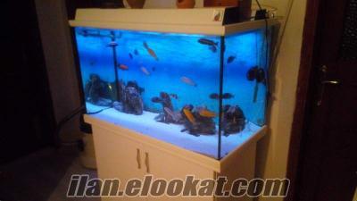 Mobilyali ful set yağmur akvaryum balıklar dahill