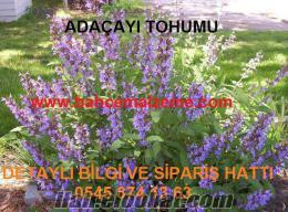 adaçayı-tohumu-ankara, adaçayı fiyatları izmir, tıbbı_adaçayı_tohumu_satış, a