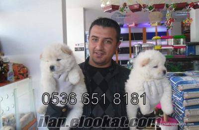 Satılık Köpek Yavrusu