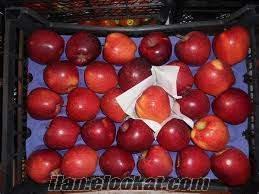 satılık starking elma
