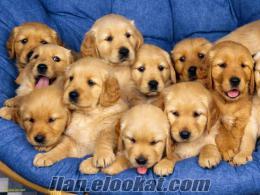 bodrumda köpek bakıcılığı