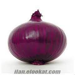 Soğan -Violet Mor