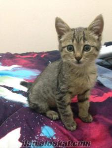 yavru kedi Ankara acil