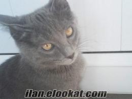 Etimesgut kayıp kedi