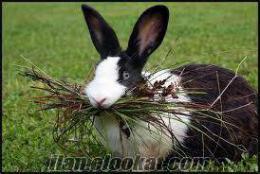 Pendikde hazır tavşan eti
