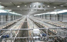 Tavuk Kafesi 5000