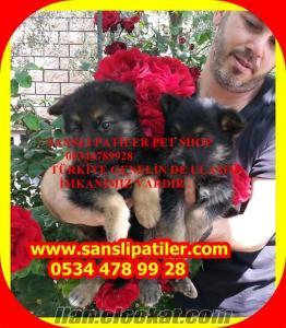 satılık alman kurt köpeği yavruları