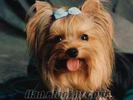 istanbulda ücretsiz terrier