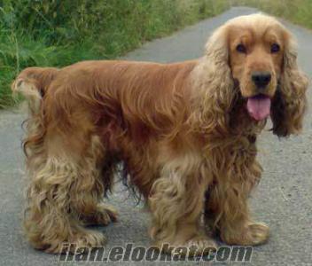 Akhisarda kayıp köpek