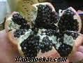 manisa muradiyede 190 dönüm zeytin ve badem