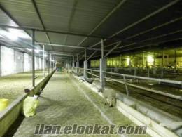 edirnede satılık hayvan ciftliği