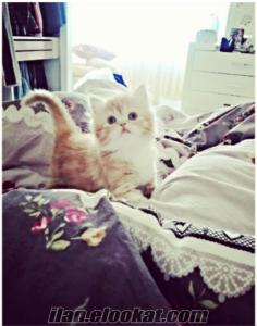 iran kedisi anne ve yavru yeni yuva arıyor :)