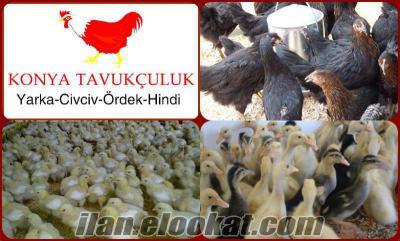 konya tavukçuluk civciv ördek hindi yarka tavuk satışı