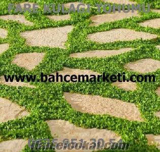 Fare kulağı tohumu, Fare kulağı çimi, fare kulağı çim tohumu, fare kulağı çiç