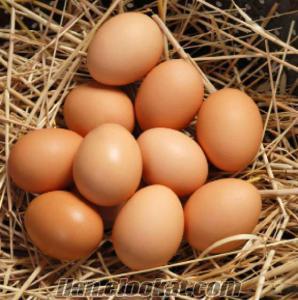 Doğal köy yumurtası