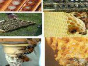 ana arı üretiminin en kaliteli adresi