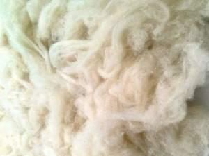 toptan satlık koyun yünü, erinos yünü, yıkanış yün, yorganlık taranmış yün,