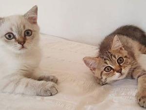 Fetih Mah. kedi fiyatları