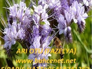 ARI OTU,  arı otu tohumu ,arı otu tohumu satışı, ankara arı otu fiyatı ,ARI OTU SATIŞI,