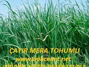 çayır mera tohumu, çayır mera tohumu satış, çayır mera karışımı,çayır mera fiyatı,