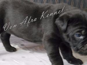 Altınkum Mah. köpek ilanı ver