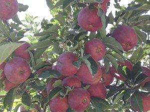 Satılık kırmızı-sarı ve yeşil elmalar