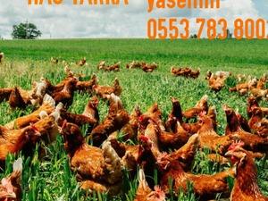 Demirler Köyü hayvanlar ilanı ver