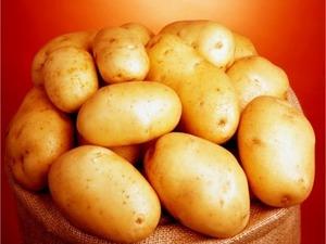 Satılık hermes patates tohumu