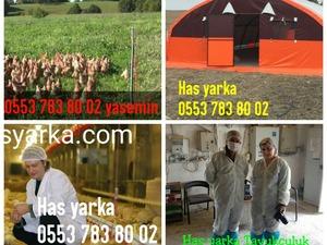 İzzettin Köyü hayvanlar ilanı