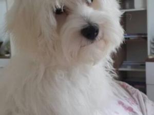 Bahçeşehir 1. Kısım Mah. köpek ilanı ver
