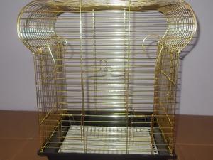 taç muhabbet kuşu kafesi altın sarısı