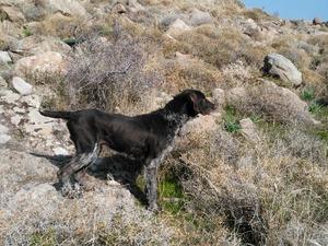 Evka-2 Mah. köpek fiyatları