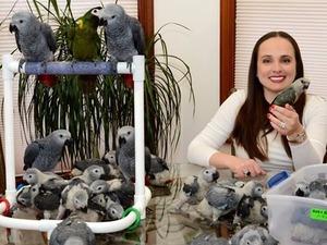 Afrika gri papağanı / jako papağanı Dişi ve Erkek Toplamalar Köyü