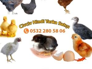 5 Nisan Mah. hayvanlar fiyatları