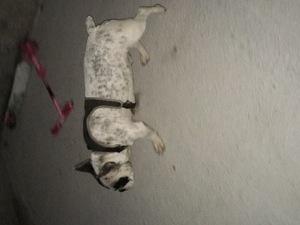 Körfez Mah. köpek ilanı