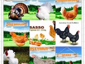 Beşyol Köyü hayvanlar ilanı